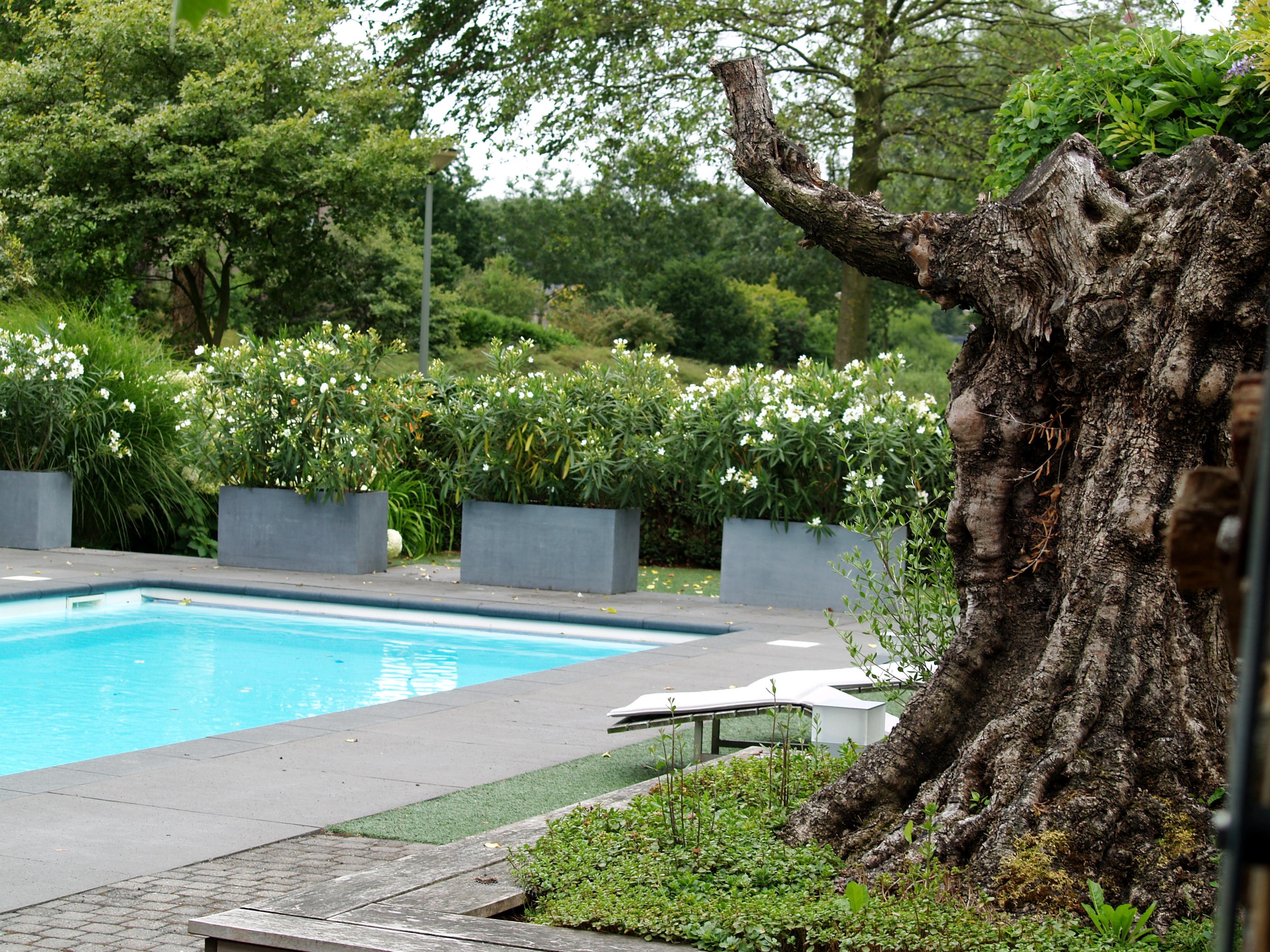 Projecten oxalis for Tuin met zwembad